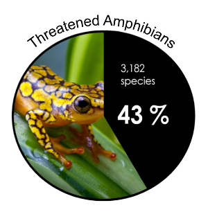 research paper amphibians Top cited articles anuran reproductive modes: evolving perspectives vol 49,  iss 1 a test of aposematism in the dendrobatid poison frog oophaga pumilio:.